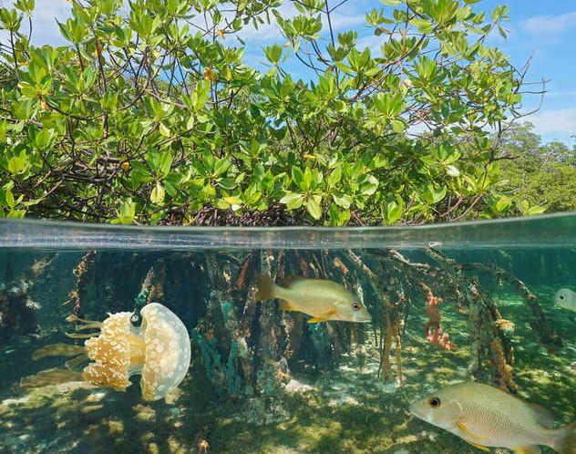 Biodiversità: il Parlamento UE approva obiettivi vincolanti per proteggere gli ecosistemi